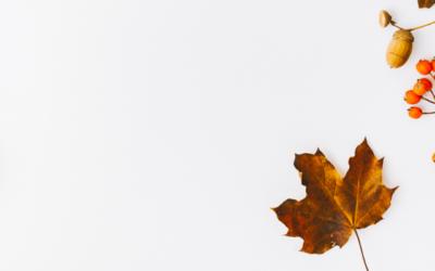 Estágio de outono para crianças – 2019